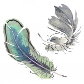 "Постер, картина, фотообои ""Watercolor bird feather from wing isolated. Aquarelle feather for background. Isolated feather illustration element."""