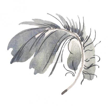 Photo pour Plume d'oiseau d'aquarelle de l'aile isolée. Plume d'aquarelle pour fond, texture, motif d'emballage, cadre ou bordure. Élément isolé d'illustration de plume. - image libre de droit