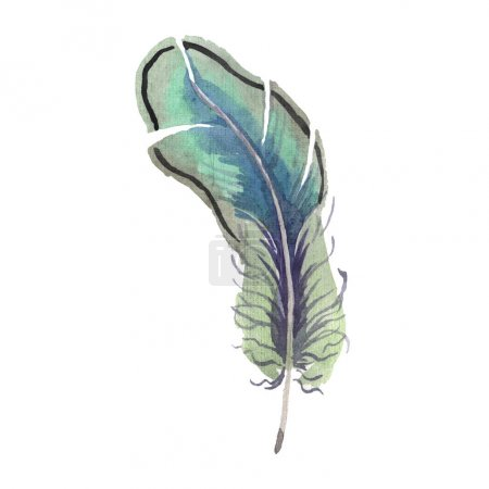 Foto de Watercolor bird feather from wing isolated. Aquarelle feather for background, texture, wrapper pattern, frame or border. Isolated feather illustration element. - Imagen libre de derechos