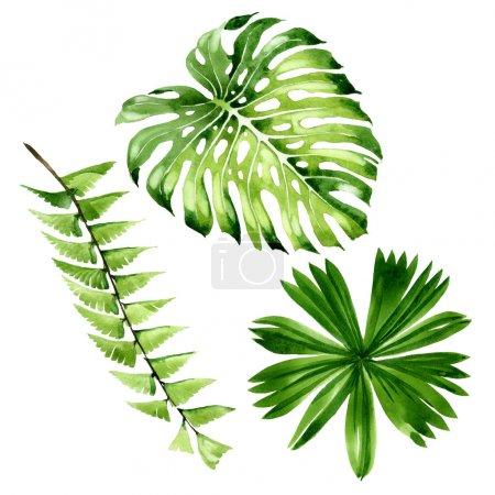 Photo pour Été hawaïen tropical exotique. Palm plage arbre feuilles jungle botanique. Ensemble d'illustration de fond aquarelle. Aquarelle dessin mode aquarelle isolé. Elément d'illustration de feuille isolé . - image libre de droit