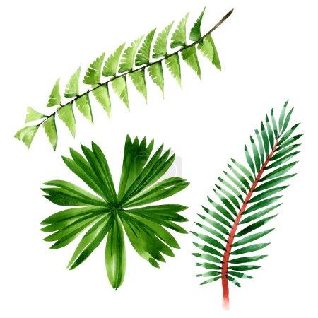 Photo pour Été tropical hawaïen exotique. L'arbre de plage de palmier laisse la jungle botanique. Ensemble d'illustration de fond d'aquarelle. Aquarelle de mode de dessin d'aquarelle d'aquarelle d'aquarelle. Élément d'illustration de feuille d'isolement. - image libre de droit