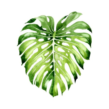 Photo pour Exotic tropical hawaiian summer. Palm beach tree leaves jungle botanical. Watercolor background illustration set. Watercolour drawing fashion aquarelle isolated. Isolated leaf illustration element. - image libre de droit