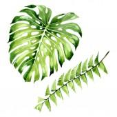 "Постер, картина, фотообои ""Palm beach tree leaves jungle botanical. Watercolor background illustration set. Isolated leaf illustration element."""