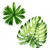 "Постер, картина, фотообои ""Palm beach tree leaves jungle botanical. Watercolor background illustration set. Isolated leaf illustration element."""