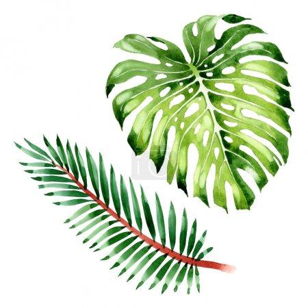 Foto de Exotic tropical hawaiian summer. Palm beach tree leaves jungle botanical. Watercolor background illustration set. Watercolour drawing fashion aquarelle isolated. Isolated leaf illustration element. - Imagen libre de derechos