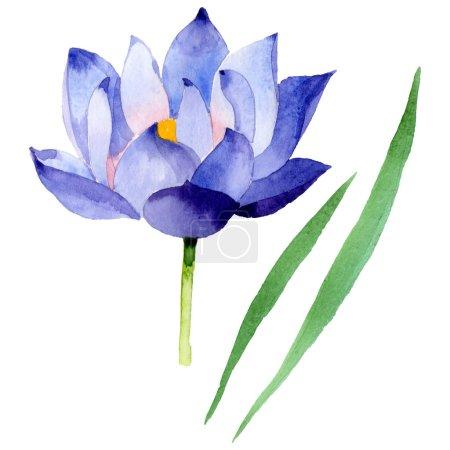Foto de Blue lotus floral botanical flowers. Wild spring leaf wildflower. Watercolor background illustration set. Watercolour drawing fashion aquarelle. Isolated nelumbo illustration element. - Imagen libre de derechos