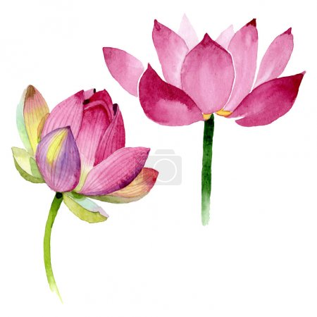 Photo pour Fleurs botaniques florales de lotus rose. Feuille de printemps sauvage fleur sauvage. Ensemble d'illustration de fond aquarelle. Aquarelle dessin mode aquarelle. Élément d'illustration nelumbo isolé . - image libre de droit