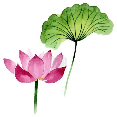 Photo pour Fleurs botaniques florales de lotus rose. Fleur sauvage sauvage de feuille de source. Ensemble d'illustration de fond d'aquarelle. Aquarelle de dessin à l'aquarelle. Élément d'illustration de nelumbo d'isolement. - image libre de droit