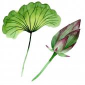 """Постер, картина, фотообои """"Зеленый бутон лотоса цветочные ботанические цветы. Набор фоновых иллюстраций акварели. Изолированный элемент иллюстрации nelumbo."""""""