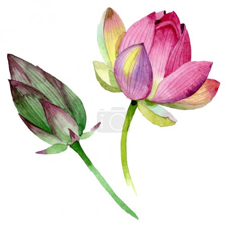 Photo for Pink lotus floral botanical flowers. Wild spring leaf wildflower. Watercolor background illustration set. Watercolour drawing fashion aquarelle. Isolated nelumbo illustration element. - Royalty Free Image