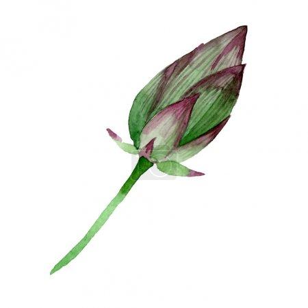 Photo pour Fleurs botaniques florales de bourgeon de lotus vert. Fleur sauvage sauvage de feuille de source. Ensemble d'illustration de fond d'aquarelle. Aquarelle de dessin à l'aquarelle. Élément d'illustration de nelumbo d'isolement. - image libre de droit