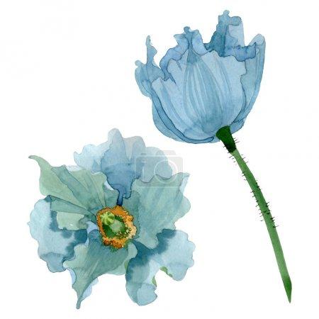 Photo pour Fleurs botaniques florales de pavot bleu. Feuille de printemps sauvage fleur sauvage. Ensemble d'illustration de fond aquarelle. Aquarelle dessin mode aquarelle. Élément d'illustration de coquelicots isolés . - image libre de droit