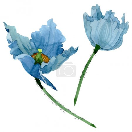 Foto de Blue poppy floral botanical flowers. Wild spring leaf wildflower. Watercolor background illustration set. Watercolour drawing fashion aquarelle. Isolated poppies illustration element. - Imagen libre de derechos