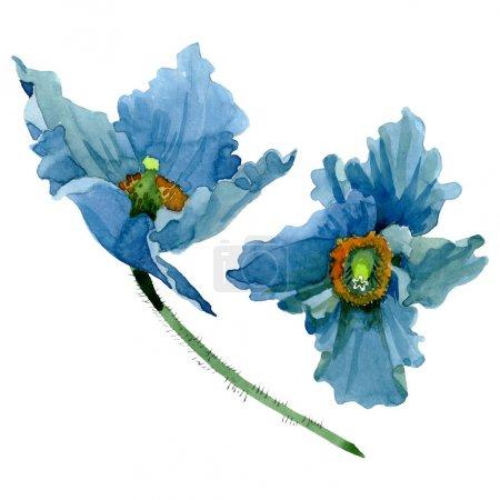 Photo pour Fleurs botaniques florales bleues de pavot. Fleur sauvage sauvage de feuille de source. Ensemble d'illustration de fond d'aquarelle. Aquarelle de dessin à l'aquarelle. Élément d'illustration de coquelicots d'isolement. - image libre de droit