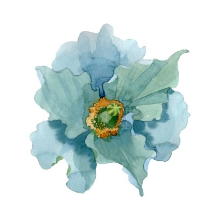 Foto de Blue poppy floral botanical flower. Wild spring leaf wildflower. Watercolor background illustration set. Watercolour drawing fashion aquarelle. Isolated poppies illustration element. - Imagen libre de derechos