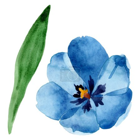 Photo for Blue tulip floral botanical flowers. Wild spring leaf wildflower isolated. Watercolor background illustration set. Watercolour drawing fashion aquarelle isolated. Isolated tulip illustration element. - Royalty Free Image