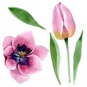 """Постер, картина, фотообои """"Розовые тюльпаны цветочные ботанические цветы. Набор фоновых иллюстраций акварели. отдельные тюльпаны иллюстрация элемента."""""""