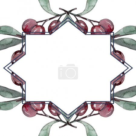 Foto de Rama de olivo con fruta negra y verde. Conjunto de ilustraciones de fondo acuarela. Acuarela de moda dibujo Aquarelle aislado. Marco cuadrado ornamento del borde. - Imagen libre de derechos