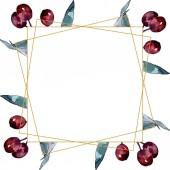 """Постер, картина, фотообои """"Оливковая ветвь с черными и зелеными фруктами. Набор фоновых иллюстраций акварели. Рама границы орнамент площади."""""""