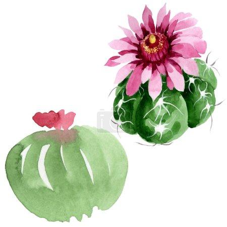 Foto de Flores botánicas florales de cactus verdes. Hoja de primavera silvestre wildflower aislado. Conjunto de ilustraciones de fondo de acuarela. Acuarela dibujando moda acuarela. Elemento de ilustración de cactus aislado. - Imagen libre de derechos