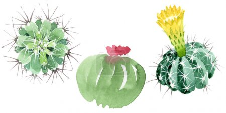 Photo for Green cactus floral botanical flowers. Wild spring leaf wildflower isolated. Watercolor background illustration set. Watercolour drawing fashion aquarelle. Isolated cacti illustration element. - Royalty Free Image