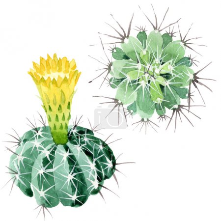 Photo pour Fleurs botaniques florales de cactus vert. Fleur sauvage de neige sauvage de feuille de source d'isolement. Ensemble d'illustration de fond d'aquarelle. Aquarelle de dessin à l'aquarelle. Élément isolé d'illustration de cactus. - image libre de droit