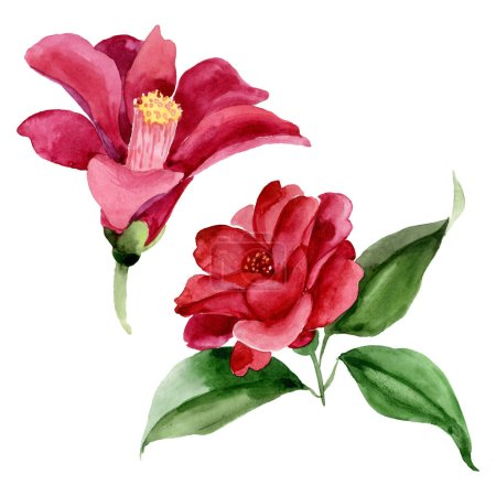 Foto de Red camelia floral botanical flower. Wild spring leaf wildflower. Watercolor background illustration set. Watercolour drawing fashion aquarelle. Isolated camelia illustration element. - Imagen libre de derechos