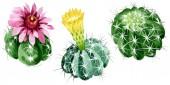 """Постер, картина, фотообои """"Зеленые кактусы цветочные ботанические цветы. Набор фоновых иллюстраций акварели. Изолированный элемент иллюстрации кактусов."""""""