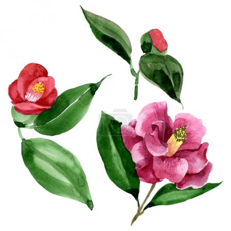 Photo for Red camelia floral botanical flower. Wild spring leaf wildflower. Watercolor background illustration set. Watercolour drawing fashion aquarelle. Isolated camelia illustration element. - Royalty Free Image