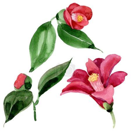 Photo pour Fleur botanique florale de camélia rouge. Feuille de printemps sauvage fleur sauvage. Ensemble d'illustration de fond aquarelle. Aquarelle dessin mode aquarelle. Elément d'illustration de camélia isolé . - image libre de droit