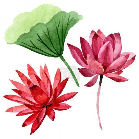 Photo pour Lotus rouge fleur botanique florale. Feuille de printemps sauvage fleur sauvage. Ensemble d'illustration de fond aquarelle. Aquarelle dessin mode aquarelle. Élément d'illustration de lotus isolé . - image libre de droit