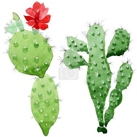 Photo pour Fleurs botaniques florales de cactus vert. Fleur sauvage sauvage de feuille de source. Ensemble d'illustration de fond d'aquarelle. Aquarelle de dessin à l'aquarelle. Élément isolé d'illustration de cactus. - image libre de droit