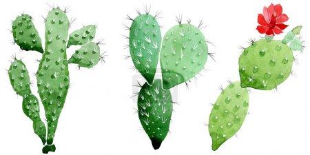 Foto de Flores botánicas florales de cactus verdes. Flor silvestre de la hoja de primavera wildflower. Conjunto de ilustraciones de fondo de acuarela. Acuarela dibujando moda acuarela. Elemento de ilustración de cactus aislado. - Imagen libre de derechos