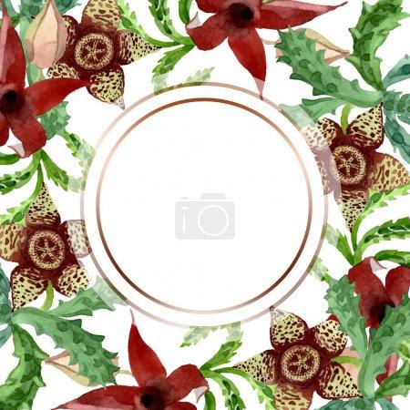 Foto de Flor botánica floral de cactus verde. Hoja de primavera silvestre wildflower aislado. Conjunto de ilustraciones de fondo de acuarela. Acuarela dibujando moda acuarela aislada. Marco borde ornamento cuadrado. - Imagen libre de derechos