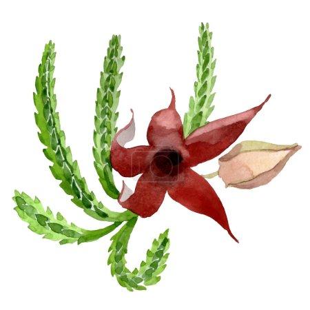 Photo pour Fleur botanique floral vert cactus. Wildflower de feuille de printemps sauvage isolé. Aquarelle de fond illustration ensemble. Dessin aquarelle de mode aquarelle. Élément d'illustration isolé cactus. - image libre de droit
