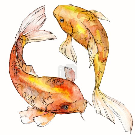 Watercolor aquatic underwater colorful tropical fish set. Red sea and exotic fishes inside: Goldfish Isolated.