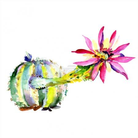 Foto de Cactus verde. Flor botánica floral. Hoja de primavera silvestre wildflower aislado. Acuarela dibujando moda acuarela aislada. Elemento de ilustración de cactus aislado. - Imagen libre de derechos