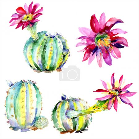 Photo for Green cactus. Floral botanical flower. Wild spring leaf wildflower isolated. Watercolour drawing fashion aquarelle isolated. Isolated cacti illustration element. - Royalty Free Image