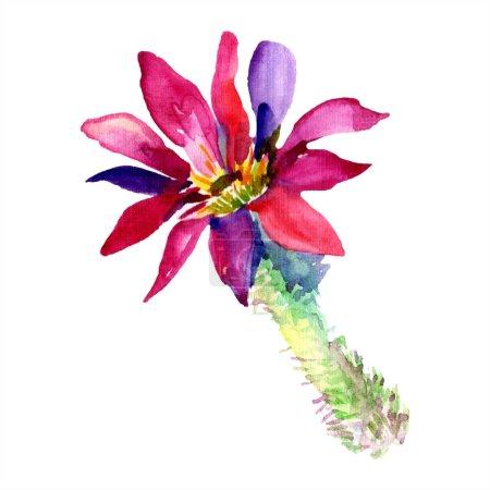 Photo pour Cactus vert. Fleur botanique florale. Fleur sauvage de neige sauvage de feuille de source d'isolement. Aquarelle de mode de dessin d'aquarelle d'aquarelle d'aquarelle. Élément isolé d'illustration de cactus. - image libre de droit