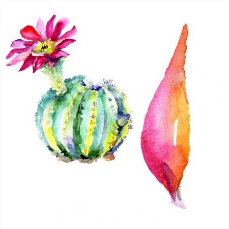 Photo pour Un cactus vert. Fleur botanique florale. Feuille sauvage de printemps fleur sauvage isolée. Aquarelle dessin mode aquarelle isolé. Élément d'illustration de cactus isolés . - image libre de droit