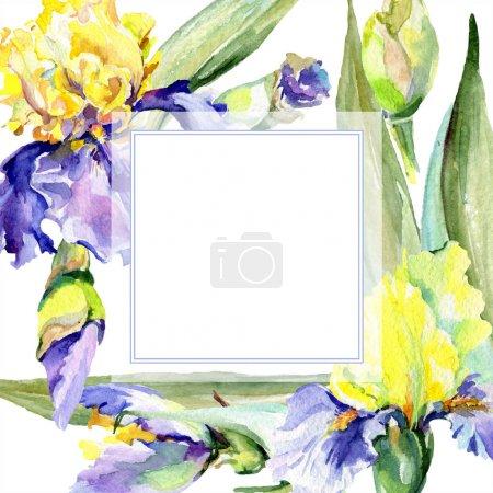 Photo pour Iris jaune pourpre. Fleur botanique florale. Fleur sauvage de neige sauvage de feuille de source d'isolement. Ensemble d'illustration de fond d'aquarelle. Aquarelle de dessin à l'aquarelle. Carré d'ornement de bordure de cadre. - image libre de droit