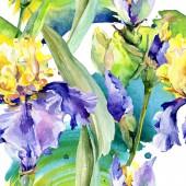 """Постер, картина, фотообои """"Фиолетовая желтая радужная оболочка. Цветочный ботанический цветок. Дикий весенний лист полевых цветов изолированы. Набор фоновых иллюстраций акварели. Акварель рисунок моды водолея изолированы."""""""