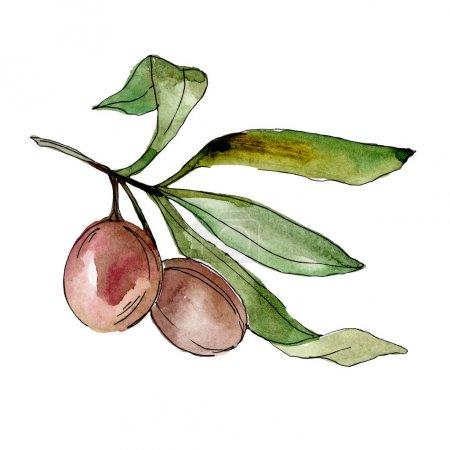 Photo for Black olives watercolor background illustration set. Watercolour drawing fashion aquarelle. Isolated olives illustration element. - Royalty Free Image