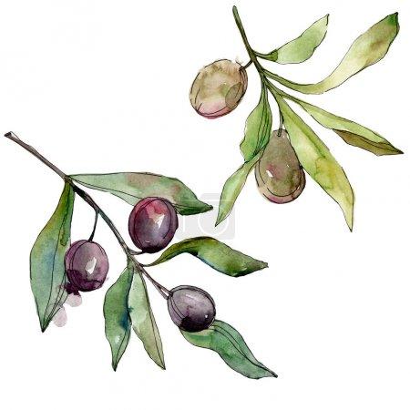 Photo pour Olives noires aquarelle fond illustration ensemble. Dessin aquarelle de mode aquarelle. Élément d'illustration isolé olives. - image libre de droit