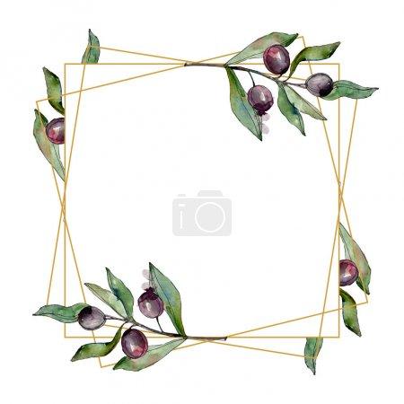 Photo pour Olives noires aquarelle fond illustration ensemble. Aquarelle dessin mode aquarelle isolé. Feuille verte. Feuillage floral de jardin botanique de plante de feuille. Cadre bordure ornement carré . - image libre de droit