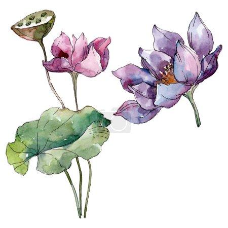 Photo pour Fleurs botaniques florales de lotus. Fleur sauvage de neige sauvage de feuille de source d'isolement. Ensemble d'illustration de fond d'aquarelle. Aquarelle de mode de dessin d'aquarelle d'aquarelle d'aquarelle. Élément isolé d'illustration de lotus. - image libre de droit