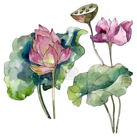 Photo pour Lotus fleurs botaniques florales. Feuille sauvage de printemps fleur sauvage isolée. Ensemble d'illustration de fond aquarelle. Aquarelle dessin mode aquarelle isolé. Élément d'illustration de lotus isolé . - image libre de droit