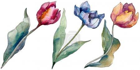 Photo pour Fleurs botaniques florales de tulipe. Fleur sauvage de neige sauvage de feuille de source d'isolement. Ensemble d'illustration de fond d'aquarelle. Aquarelle de mode de dessin d'aquarelle d'aquarelle d'aquarelle. Élément d'illustration de tulipes d'isolement. - image libre de droit