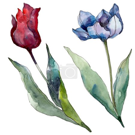 Photo for Tulip floral botanical flowers. Wild spring leaf wildflower isolated. Watercolor background illustration set. Watercolour drawing fashion aquarelle isolated. Isolated tulips illustration element. - Royalty Free Image