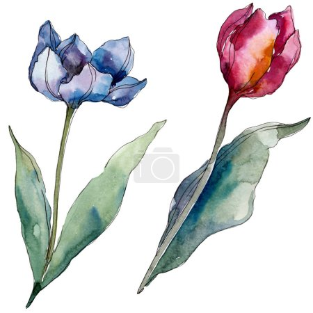 Photo pour Fleurs botaniques florales de tulipe. Fleur sauvage de neige sauvage de feuille de source d'isolement. Ensemble d'illustration de fond d'aquarelle. Aquarelle de mode de dessin d'aquarelle d'aquarelle d'aquarelle. Élément d'illustration de tulipes d'isolement. - image libre de droit